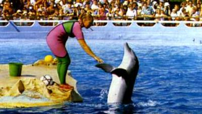 https://racingstub.com/blogs/k/katzo68/photos/marineland-210ca_th...