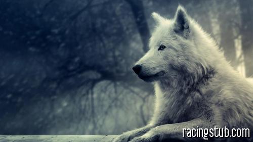 wolf-Animal_World_Wallpaper_1920x1080.jpg