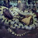anaconda-6e8f3.jpg