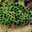 anaconda-1-d8c1d.jpg